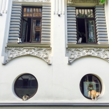 I'm not sure if I like the building or the cats more