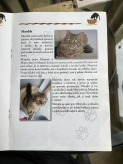 I love when a cafe has a book that explains the story of each cat.